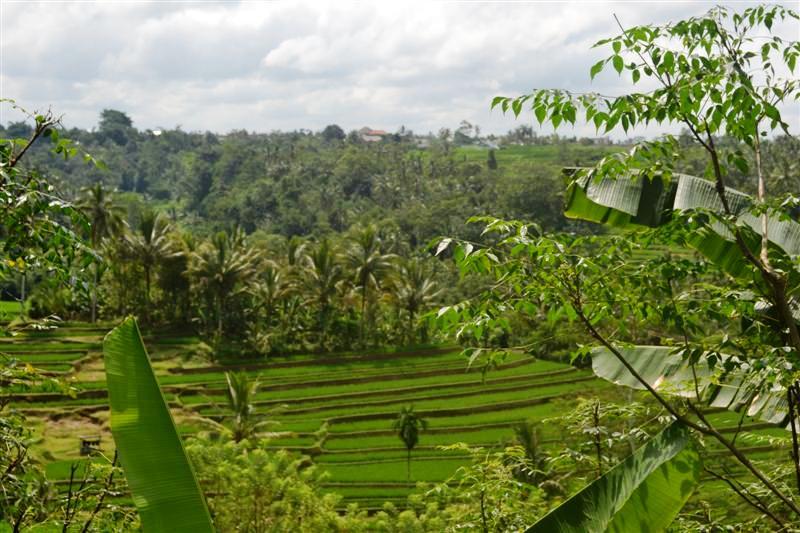 Tanah dijual murah di Tabanan Bali