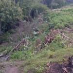 TJ1067 - dijual tanah ( Land for sale ) di Denpasar Bali