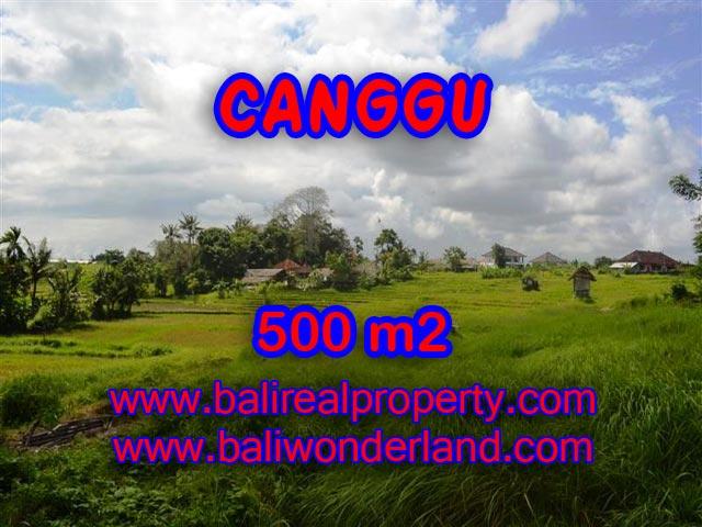 Jual tanah di Canggu Bali 5 Are di Batu Bolong
