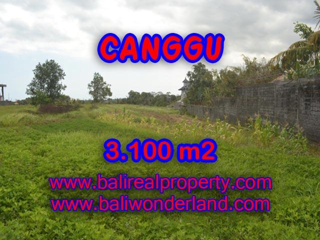 Tanah dijual di Bali 31 Are di Canggu Batu Bolong