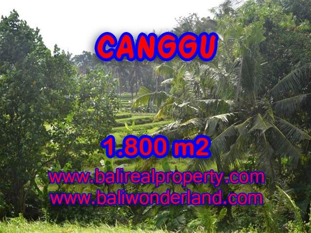 Tanah dijual di Bali 1.800 m2 view sawah,sungai di canggu brawa