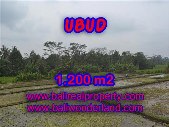 Jual tanah murah di Ubud