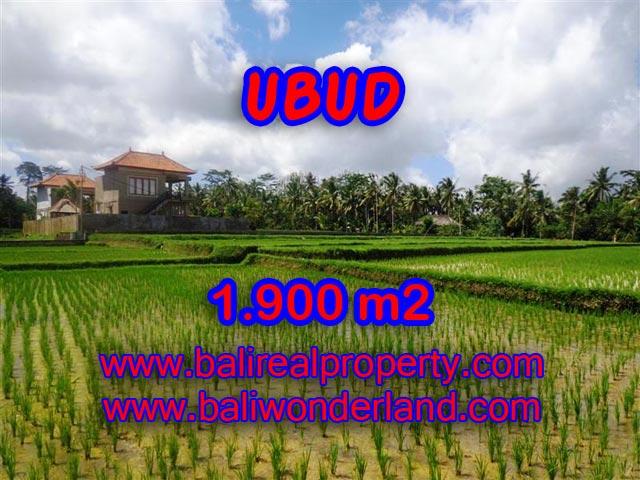 Tanah di Ubud Bali dijual 1.900 m2 view sawah dekat sungai di Dekat sentral Ubud
