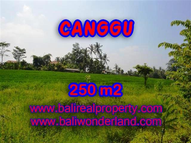 TANAH DIJUAL DI BALI, MURAH DI CANGGU RP 2.750.000 / M2 - TJCG135