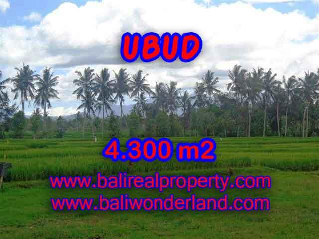 JUAL MURAH TANAH DI UBUD BALI TJUB370 - PELUANG INVESTASI PROPERTY DI BALI