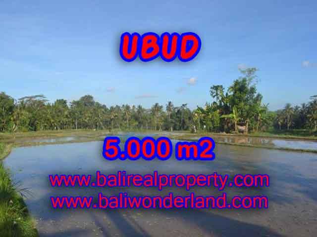 DIJUAL TANAH DI UBUD BALI TJUB413 - PELUANG INVESTASI PROPERTY DI BALI