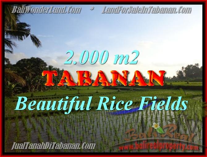 TANAH DIJUAL DI BALI, MURAH DI TABANAN HANYA RP 500.000 / M2