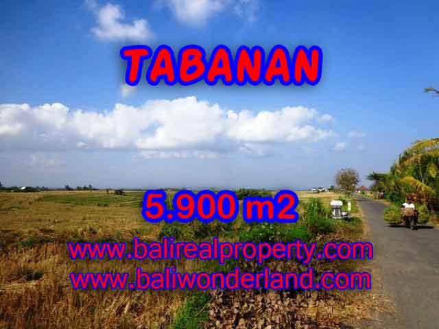 JUAL TANAH DI TABANAN BALI MURAH CUMA RP 750.000 / M2