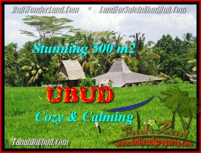 TANAH MURAH di UBUD 500 m2 di Ubud Payangan