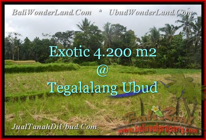 TANAH MURAH di UBUD 4,200 m2 View Sawah dan Sungai
