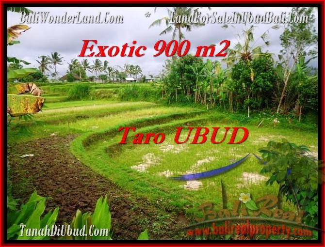 DIJUAL TANAH MURAH di UBUD BALI 900 m2 di Ubud Tegalalang