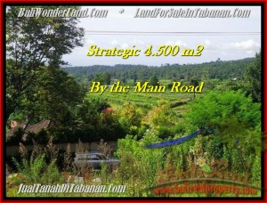 JUAL TANAH di TABANAN 45 Are view Gunung, sawah, hutan dan kota denpasar
