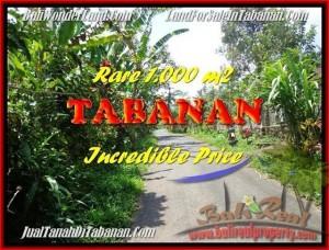 JUAL TANAH MURAH di TABANAN BALI 1.000 m2  View kebun