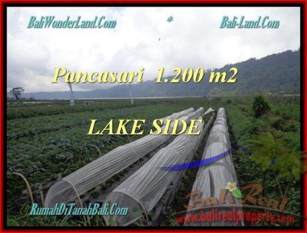 JUAL TANAH MURAH di TABANAN BALI 1.200 m2 View Danau Buyan dan Gunung