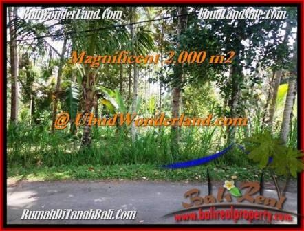 JUAL TANAH MURAH di UBUD BALI 20 Are di Ubud Payangan