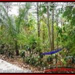 JUAL TANAH MURAH di TABANAN 2,500 m2 View kebun