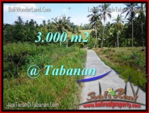 TANAH DIJUAL MURAH di TABANAN BALI 3,000 m2 di Tabanan Selemadeg