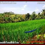TANAH DIJUAL MURAH di TABANAN Untuk INVESTASI TJTB209