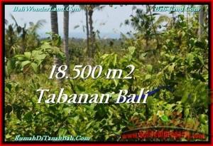 JUAL TANAH MURAH di TABANAN BALI Untuk INVESTASI TJTB232