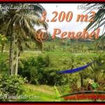 TANAH MURAH JUAL di TABANAN BALI 3,200 m2 View sawah, gunung, air panas
