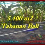 TANAH MURAH DIJUAL di TABANAN BALI 54 Are di Tabanan Selemadeg
