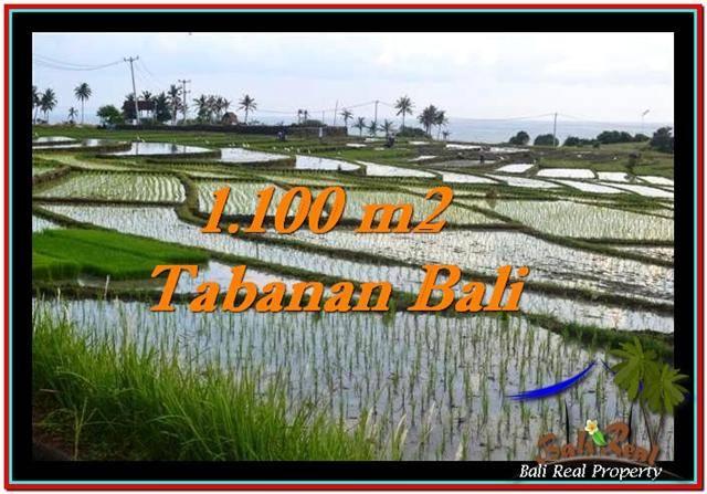 JUAL MURAH TANAH di TABANAN BALI 11 Are View sawah, laut dan gunung