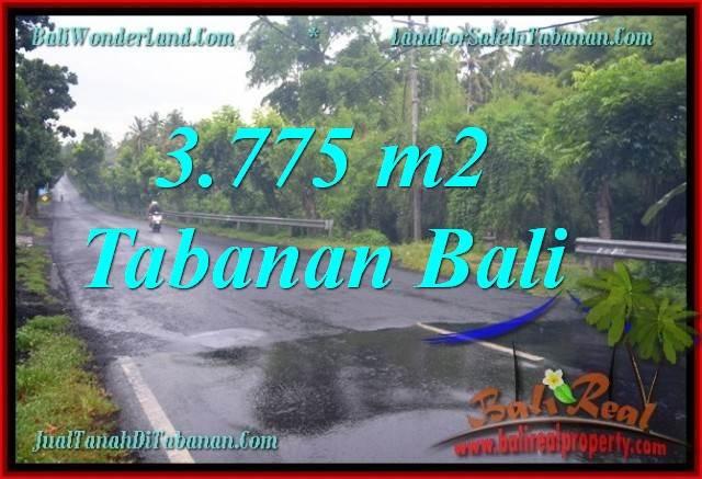 TANAH MURAH di TABANAN BALI 3,775 m2 di Tabanan Selemadeg