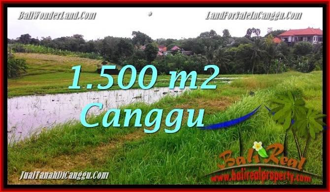 TANAH MURAH di CANGGU 1,500 m2 di Canggu Batu Bolong