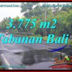 TANAH di TABANAN BALI DIJUAL MURAH 3,775 m2 di Tabanan Selemadeg