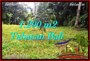INVESTASI PROPERTY, TANAH di TABANAN BALI DIJUAL MURAH TJTB278