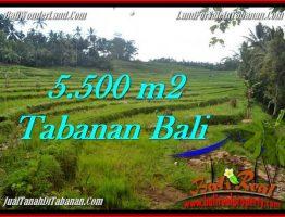 TANAH DIJUAL MURAH di TABANAN 5,500 m2 di Tabanan Penebel