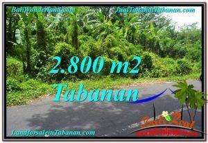 TANAH di TABANAN BALI DIJUAL MURAH 28 Are View kebun