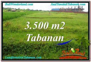 TANAH MURAH di TABANAN BALI 3,500 m2 di Tabanan Kerambitan