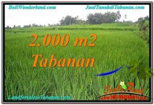 TANAH di TABANAN BALI DIJUAL MURAH 20 Are View Sawah