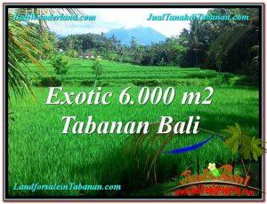 TANAH di TABANAN BALI DIJUAL MURAH 60 Are di Tabanan Penebel