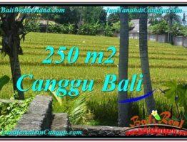 JUAL MURAH TANAH di CANGGU BALI 250 m2 di Canggu Pererenan