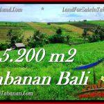 TANAH MURAH DIJUAL di TABANAN BALI Untuk INVESTASI TJTB281