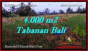 JUAL TANAH MURAH di TABANAN BALI 4,000 m2  View sawah dan laut