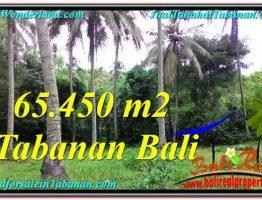 TANAH di TABANAN BALI DIJUAL MURAH 654.5 Are View laut dan sungai