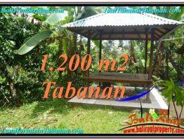 INVESTASI PROPERTY, JUAL TANAH MURAH di TABANAN BALI TJTB294