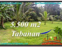 TANAH JUAL MURAH TABANAN 5,500 m2 View kebun dan sungai