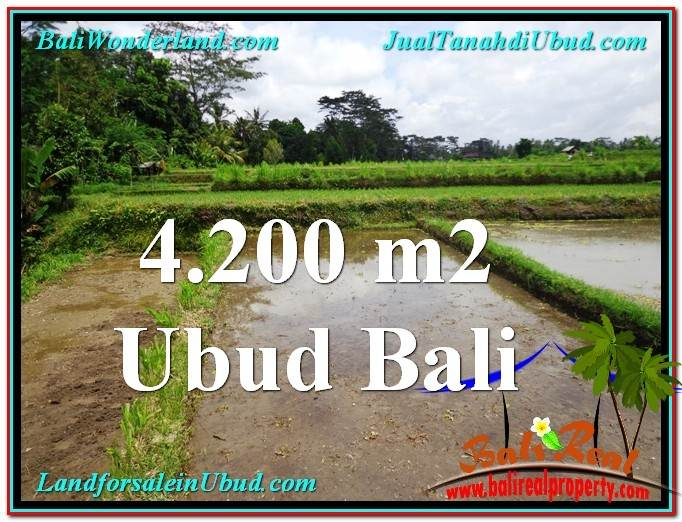TANAH di UBUD DIJUAL MURAH 42 Are di Ubud Tampak Siring