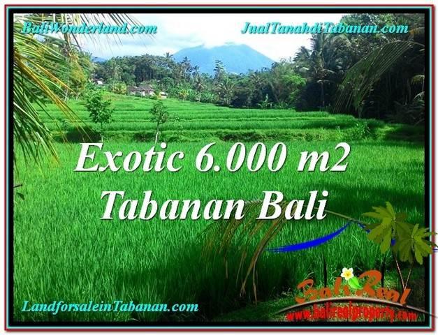 TANAH di TABANAN JUAL MURAH 60 Are View sawah, sungai dan gunung