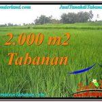 JUAL TANAH MURAH di TABANAN 2,000 m2 View Sawah