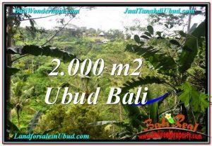 TANAH di UBUD JUAL MURAH 2,000 m2  View Tebing dan Sungai