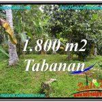JUAL TANAH MURAH di TABANAN 1,800 m2 View kebun dan sungai