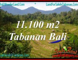 TANAH DIJUAL MURAH di TABANAN BALI 111 Are di Tabanan Penebel