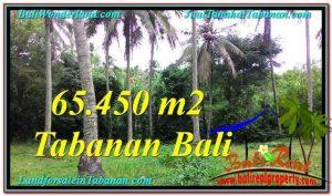 TANAH di TABANAN JUAL MURAH 654.5 Are View laut dan sungai