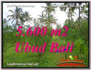 TANAH MURAH JUAL di UBUD BALI 5,600 m2  View Tebing dan kebun