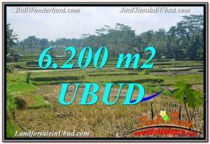 JUAL TANAH MURAH di UBUD 6,200 m2 di Ubud Payangan